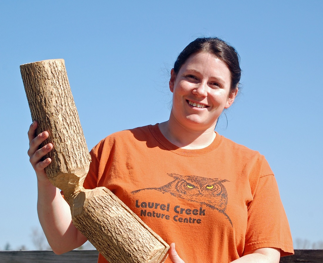Woman holding log chewed by beaver